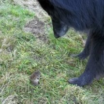Gisa vangt muis 1
