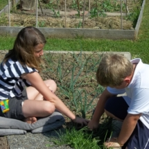veldje wortel met twee kids 29 mei (13)